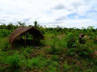 Tanzanian temporary hut