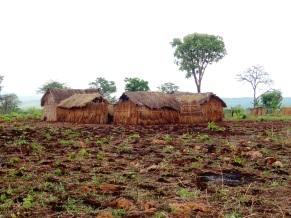 Tanzanian huts on Ikola/Mpanda road