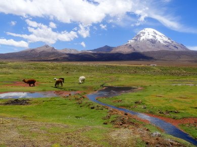 Llama farming, Bolivia