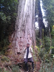 3000 year-old alerce trees