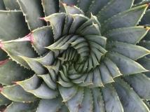 In Aloe territory