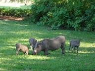 Sondwela Backpackers's backyard